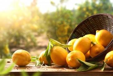 Naturellement vôtre: Les bienfaits des citrons