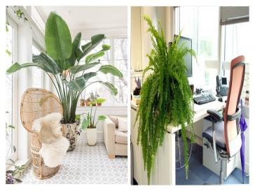 Clin d'œil: Installez des plantes à la maison et au bureau